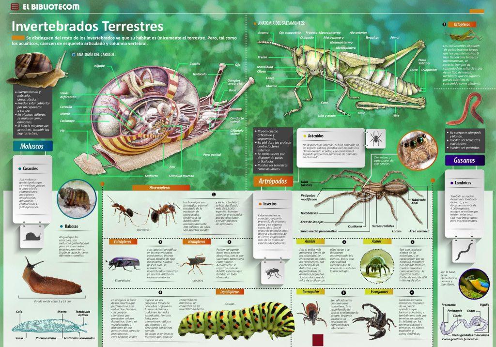 22-11-16-el-mundo-de-los-invertebrados-terrestres - INVDES