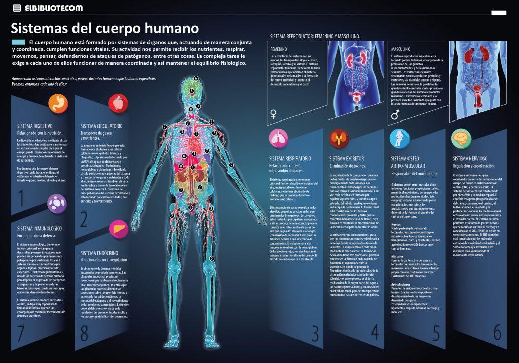 27-11-16 Sistemas del cuerpo humano - INVDES