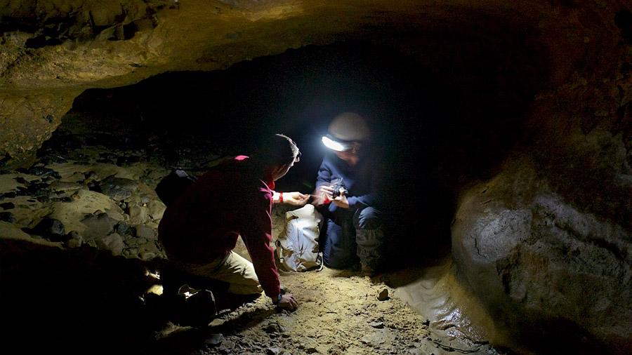 Los paleontólogos ya no necesitan buscar huesos, solo ADN