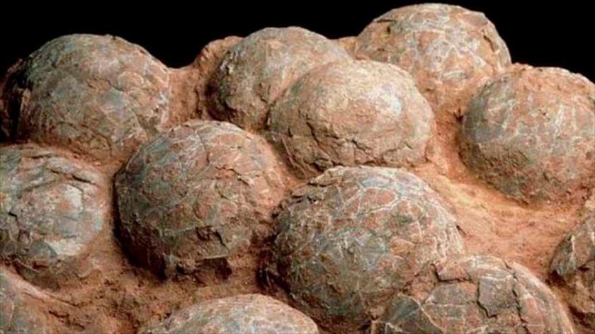 Encontraram ovos de dinossauro com embriões no sul da Argentina