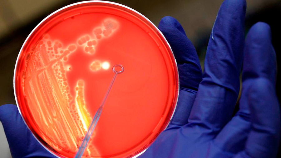 Las bacterias también aprenden a base de estímulos