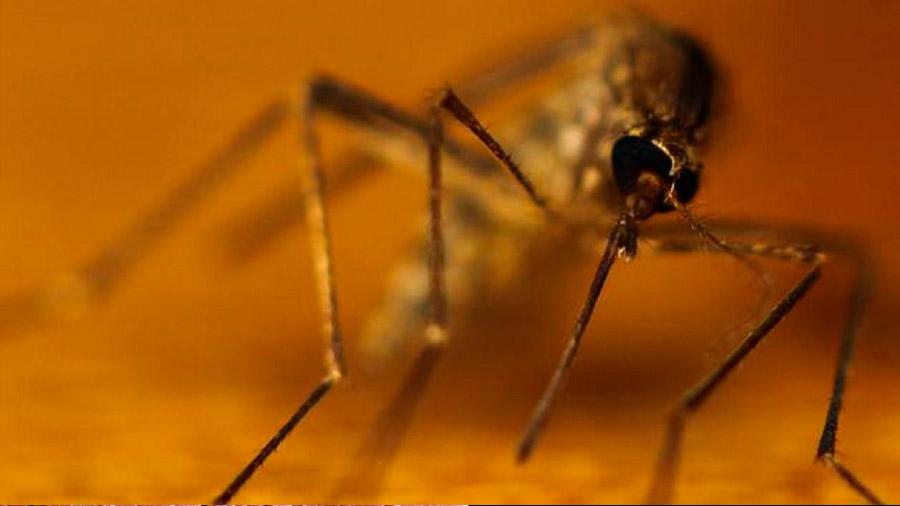 De mosquitos y sus (nuestros) males
