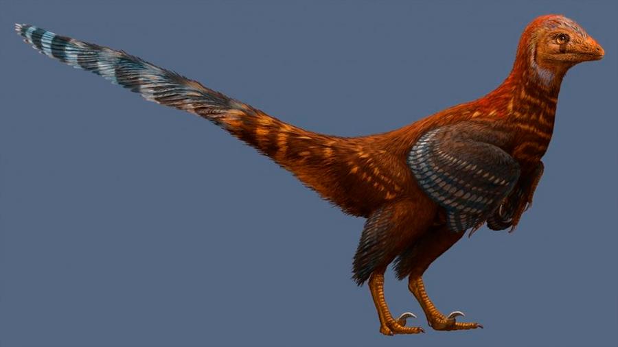 Hallan un nuevo dinosaurio parecido a un pájaro y con plumas modernas