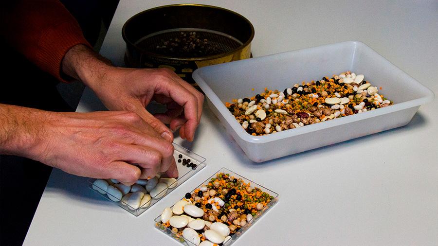 Proponen 'leyes universales' sobre el tamaño y la biología de las semillas de las plantas