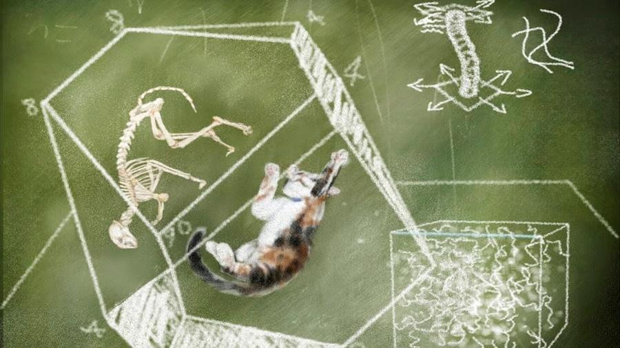 Físicos aprenden cómo crear estados del 'gato de Schroedinger'