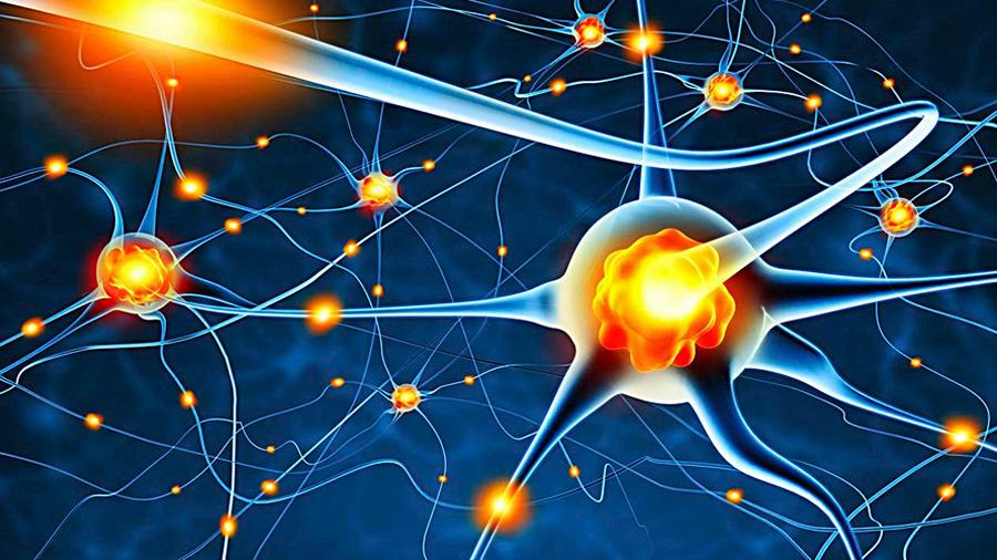 Científicos del descubren nuevo mecanismo que regula la producción neuronal