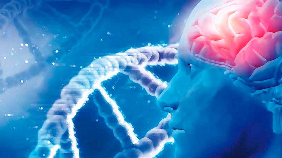 Del ADN a la neurona: un vistazo a la expresión génica del cerebro