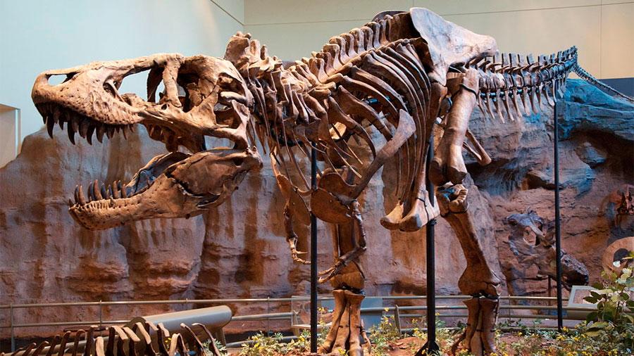 Todo lo que sabías sobre los dinosaurios podría no ser cierto