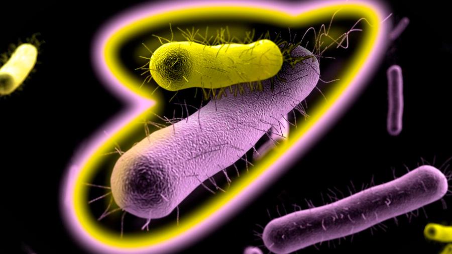 Enzimas como antibióticos: nuevas herramientas en la lucha contra las infecciones