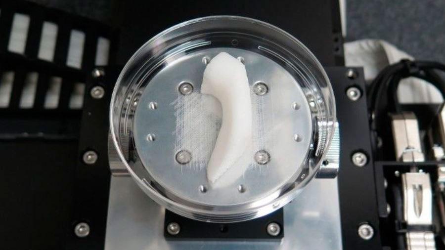 Éxito en la creación de cartílago mediante bioimpresión 3D