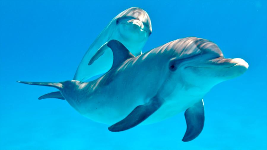 Los delfines salvajes tienen más enfermedades que aquellos en cautiverio