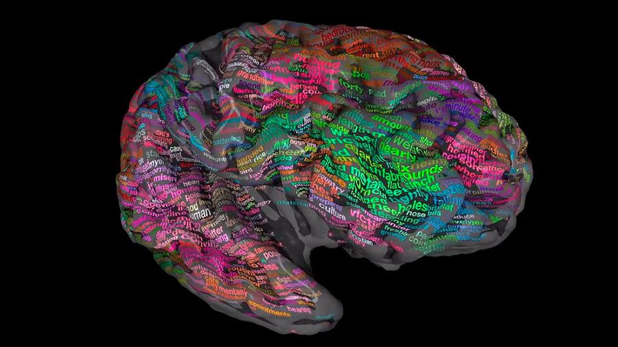 El cerebro fabrica árboles sintácticos para interpretar el lenguaje