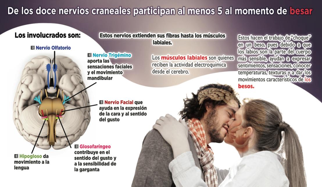 De los doce nervios craneales participan 5 al menos al momento de besar