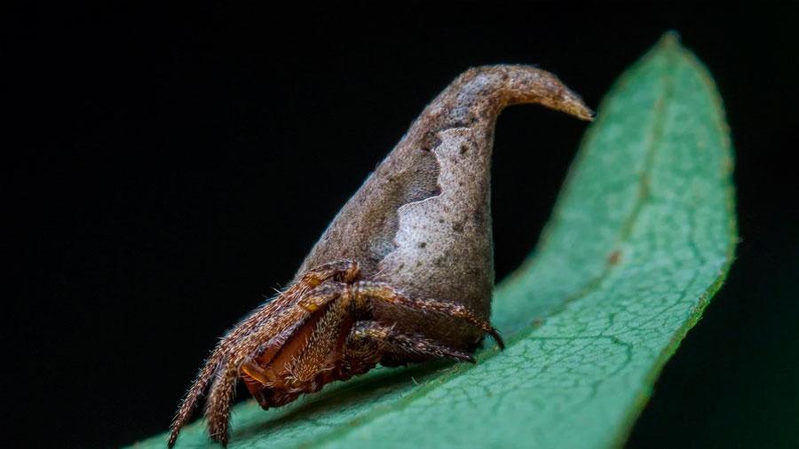 La araña Sombrero de Harry Potter lidera el Top 10 de nuevas especies