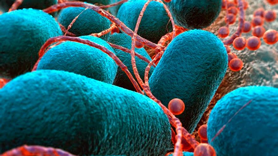 Científicos aíslan una bacteria que produce plástico a base de metano