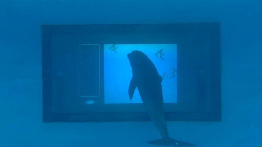 Delfines interactúan con 'apps' en una pantalla táctil