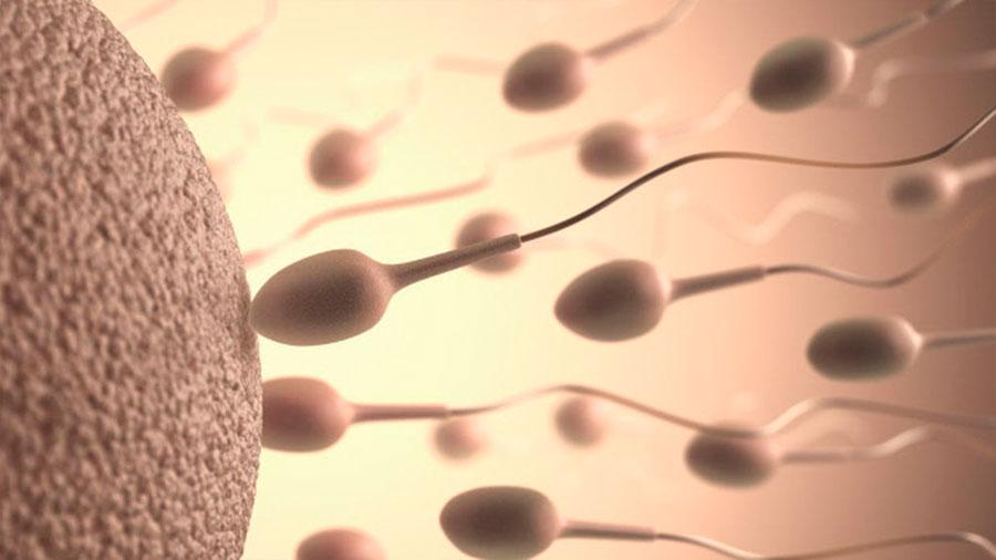 Si duermes pocas horas, tu esperma será de peor calidad