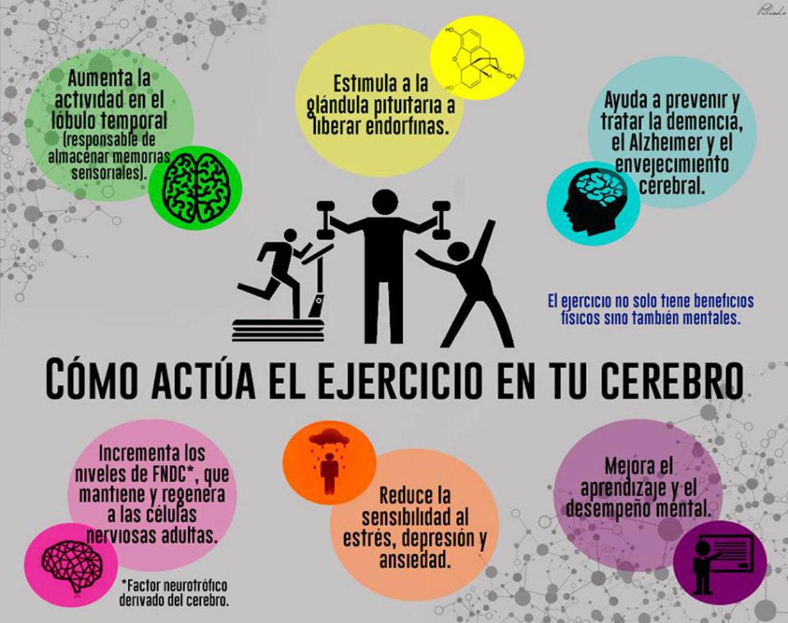 Cómo actúa el ejercicio en tu cerebro