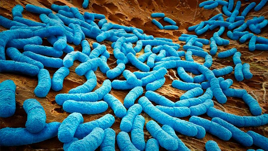 Usan bacterias como factorías para producir fármacos contra el cáncer