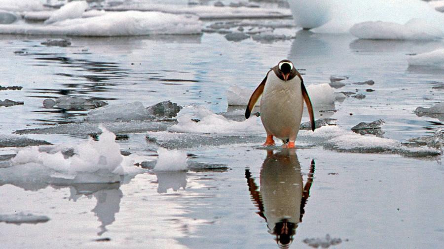 El cambio climático provocará una explosión de vida en la Antártida