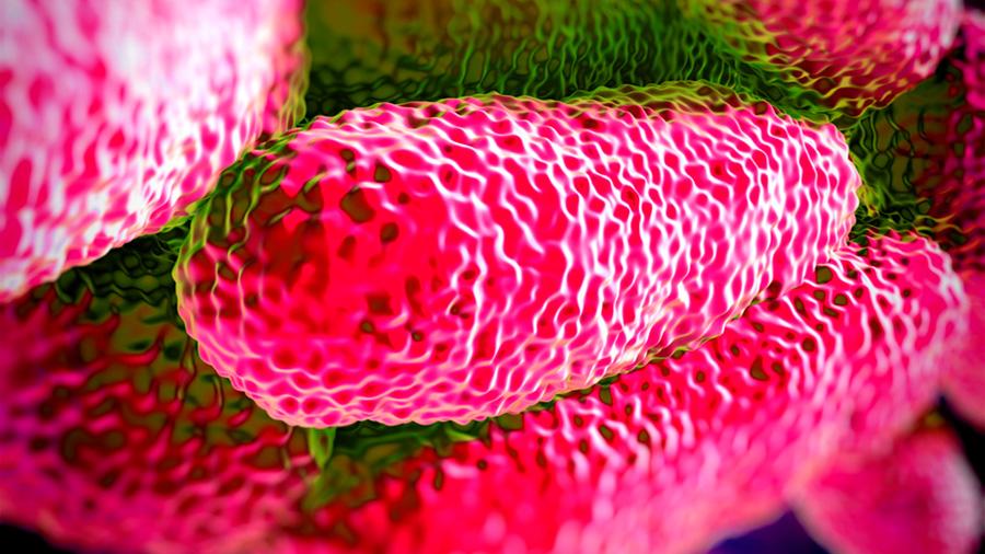 Una bacteria retiene metales pesados y devuelve productos biotecnológicos