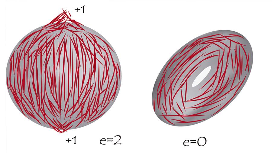Fases exóticas de la materia