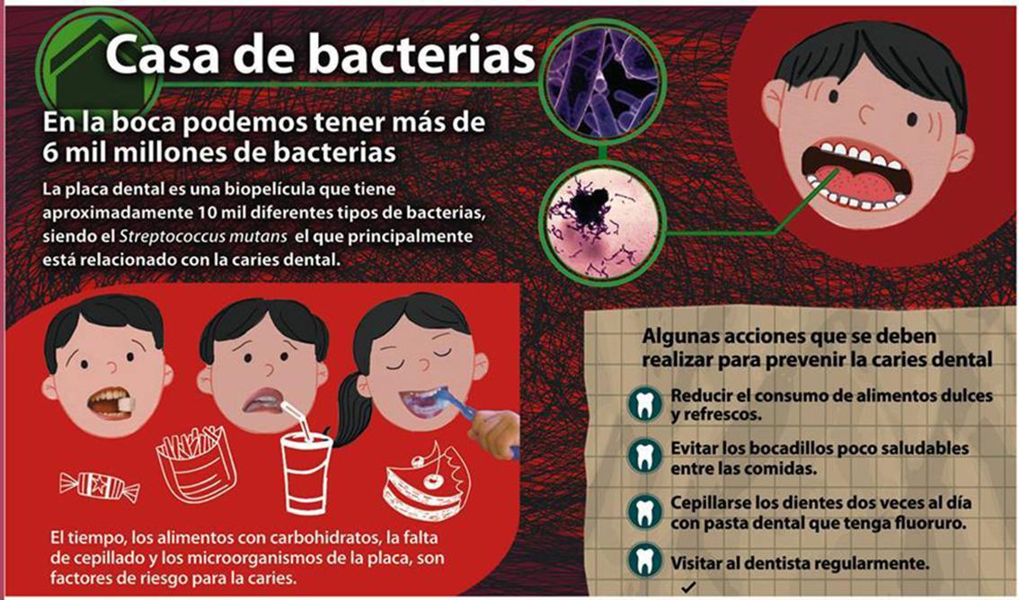 Casa de bacterias