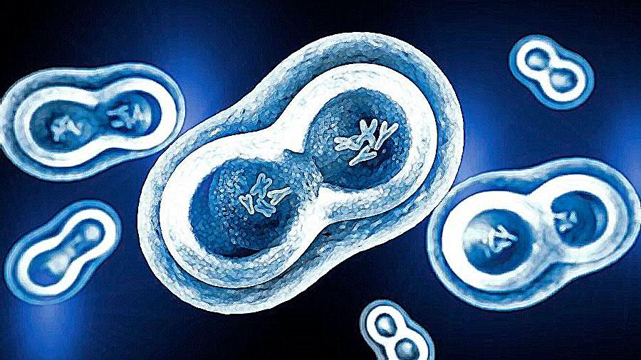 Científicos hallan una nueva forma de frenar el crecimiento de las células cancerosas