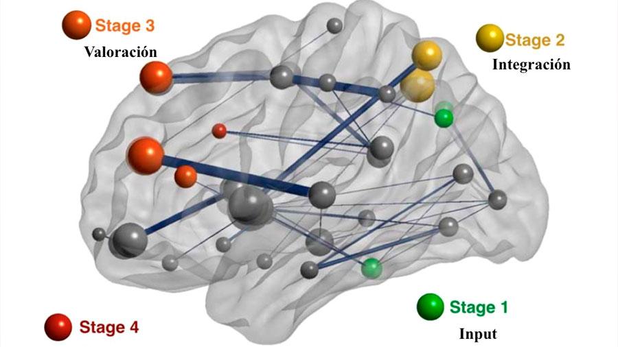 La semejanza en ciertas conexiones cerebrales predice el parecido psicológico