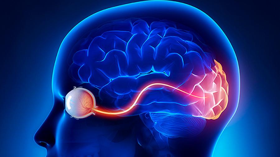 El cerebro es capaz de anticipar el futuro