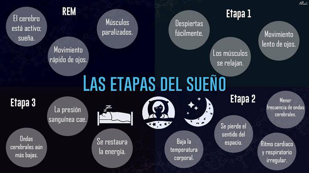 Las etapas del sueño