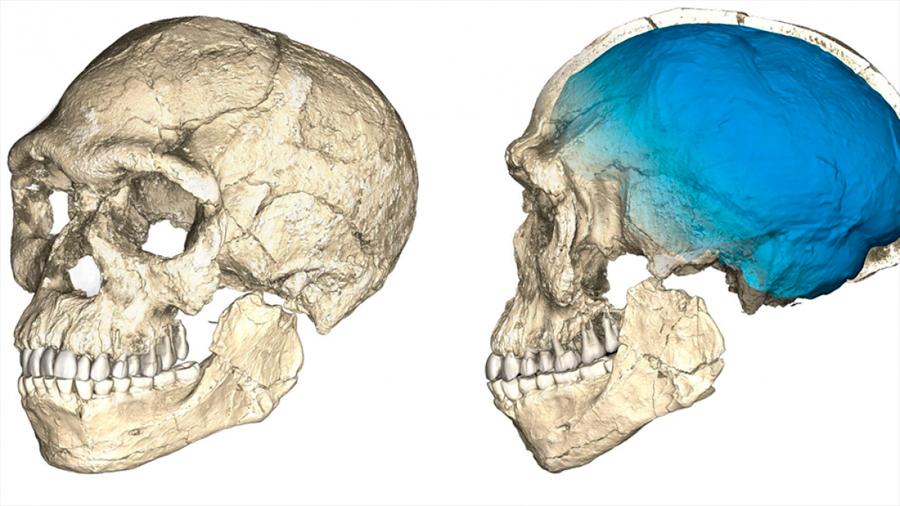 Hallados en Marruecos los restos del Homo sapiens más antiguo del mundo: más de 300 mil años