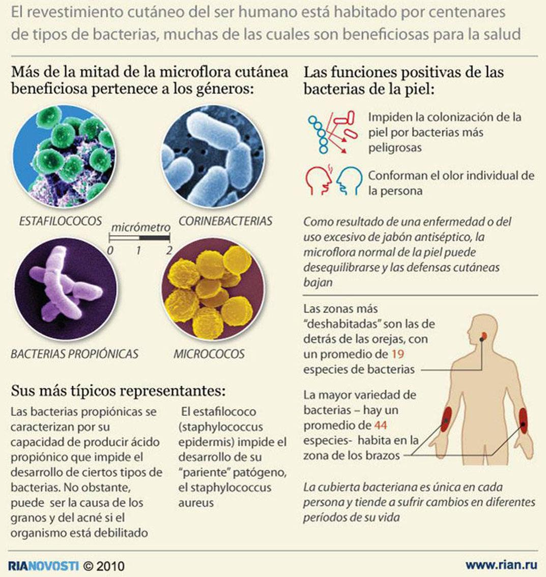 Bacterias beneficas para la salud