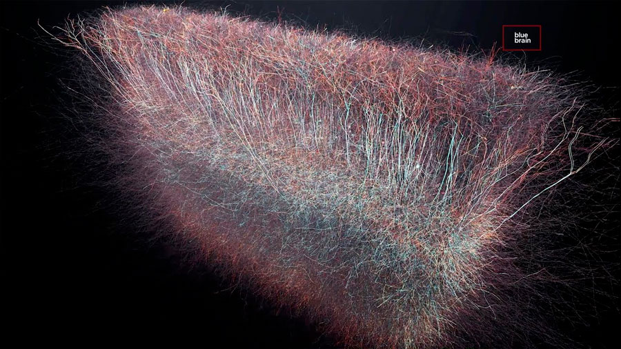 El cerebro crea estructuras geométricas para tomar una decisión