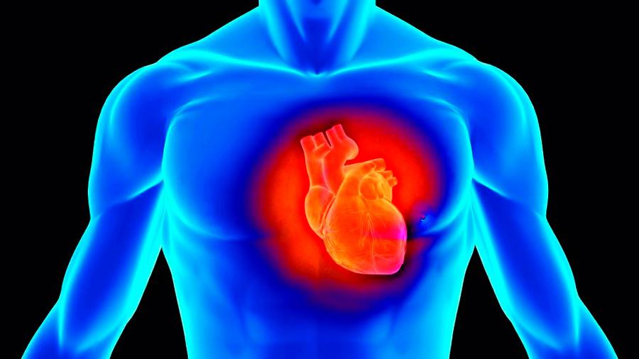 La luz mejora la función cardíaca tras un ataque al corazón