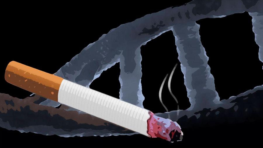 Mapa de los daños en el ADN causados por fumar