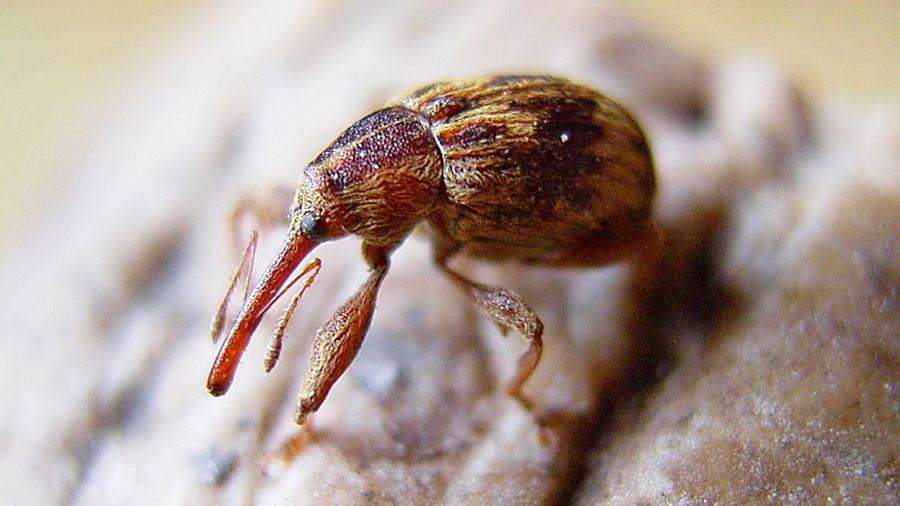 Investigadores mexicanos descubren cuatro nuevas especies de insectos