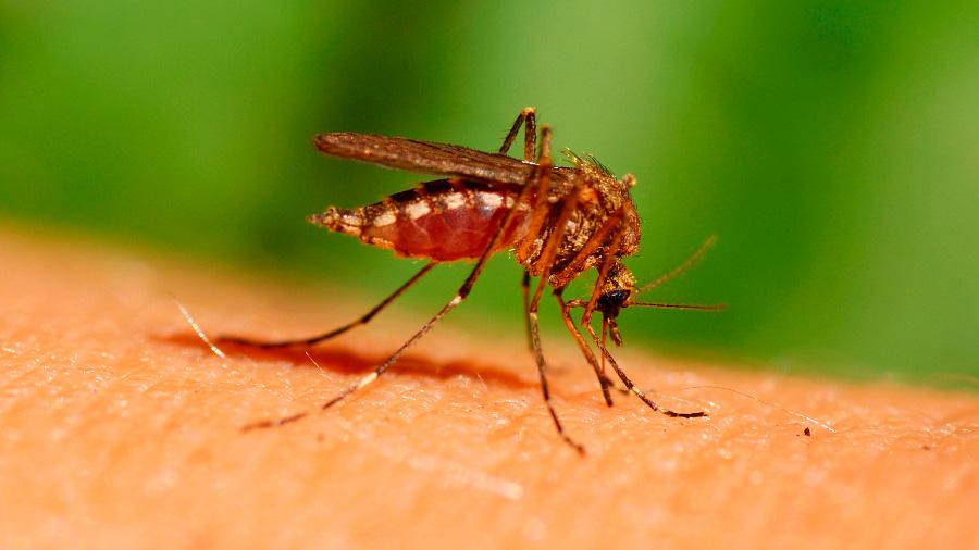 6 cosas que quizás no sabías sobre los mosquitos, la especie más mortífera del planeta
