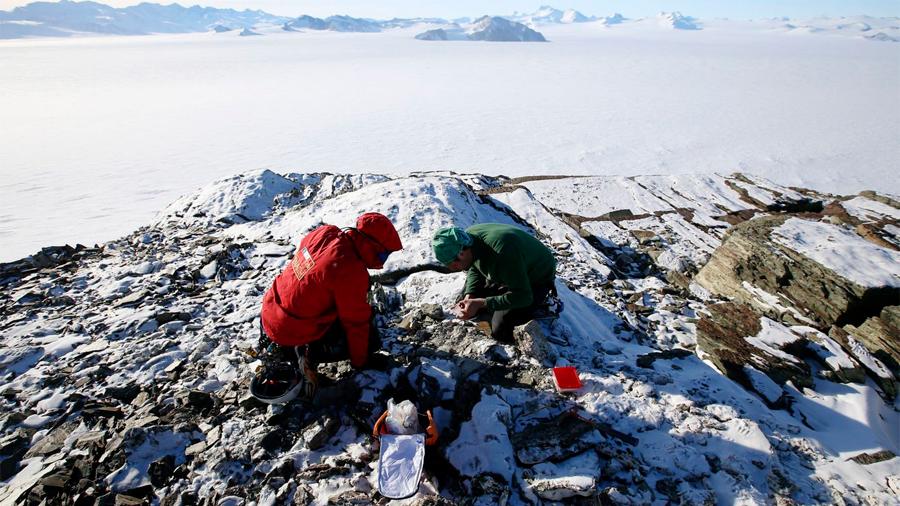 La cocaína llega a la Antártida