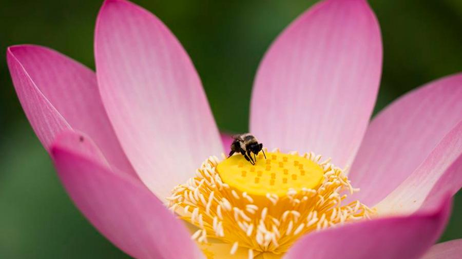 Estudio demuestra que los insecticidas sí están acabando con las abejas