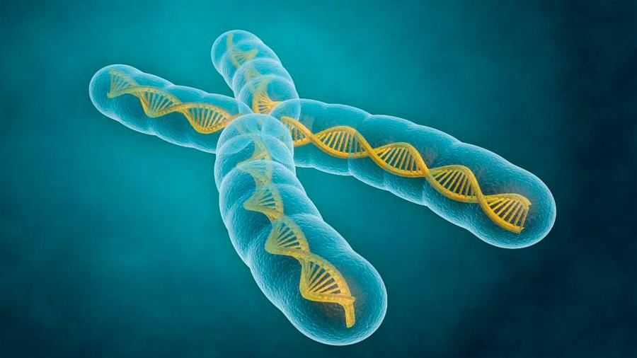 Detectan un nuevo elemento implicado en la inestabilidad de los cromosomas