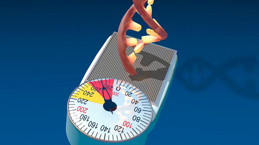 Detectan investigadores variación de un gen relacionado con la obesidad en México