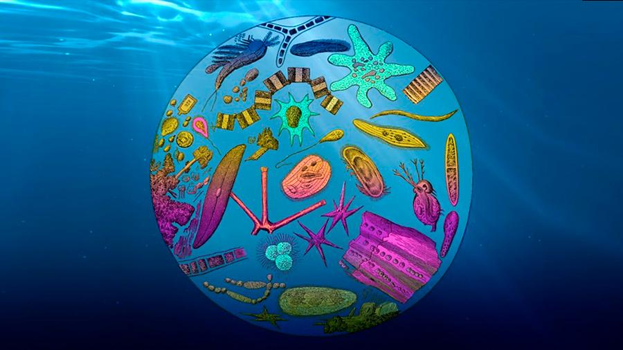 El calor reduce la absorción de CO2 por los océanos un 1,5% en 30 años