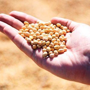 Resultado de imagen para Investigadores obtienen un bioplástico natural a partir de la proteína de la soja capaz de absorber hasta cuarenta veces su peso