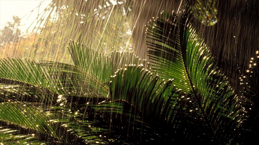 La Amazonia es capaz de producir su propia estación lluviosa