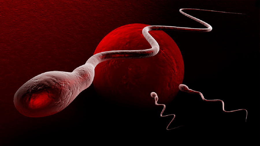 En declive, la calidad del esperma de los occidentales