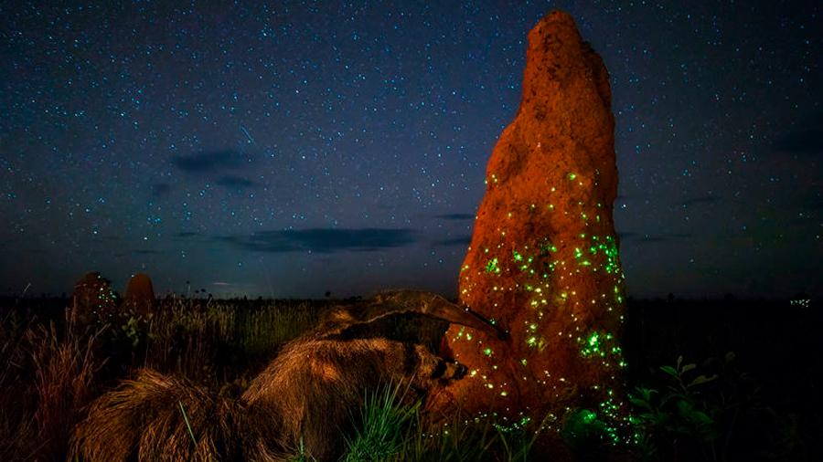 Las fantasmales luces de estas ciudades construidas por termitas esconden una trampa letal para sus habitantes