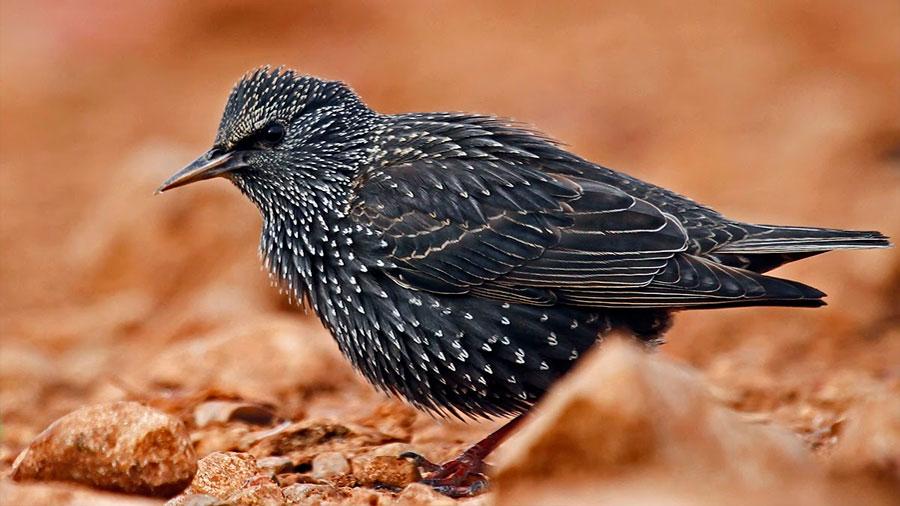 Las dos especies de ave que burlan la contaminación