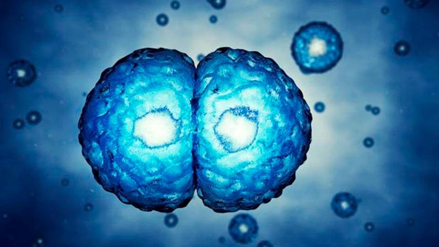 Investigadores revelan cómo las células humanas mantienen el número correcto de cromosomas