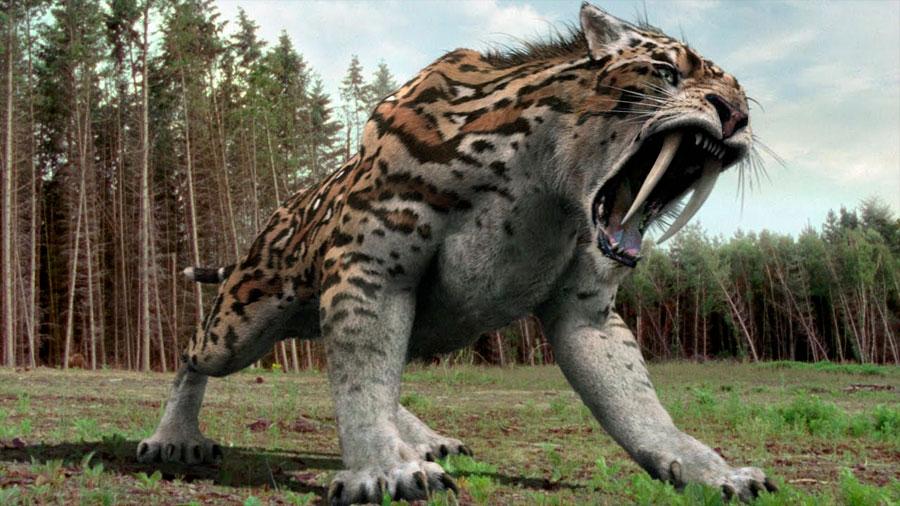 El arma secreta del tigre dientes de sable
